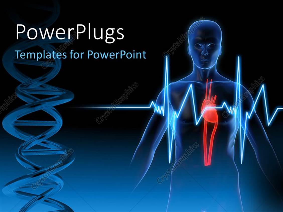 Powerpoint template anatomy depiction of a human heart for Cardiovascular powerpoint template free