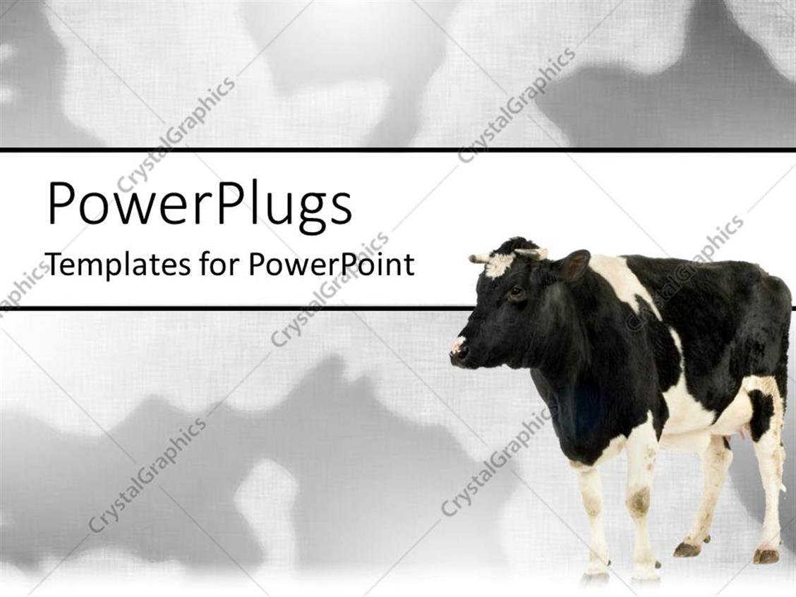 powerpoint template black and white cow on matching black and