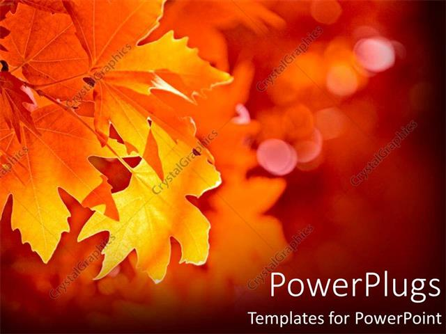 powerpoint template closeup yellow leaf during fall, Powerpoint