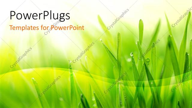 powerpoint template: close up of grass covered with morning dew on, Modern powerpoint