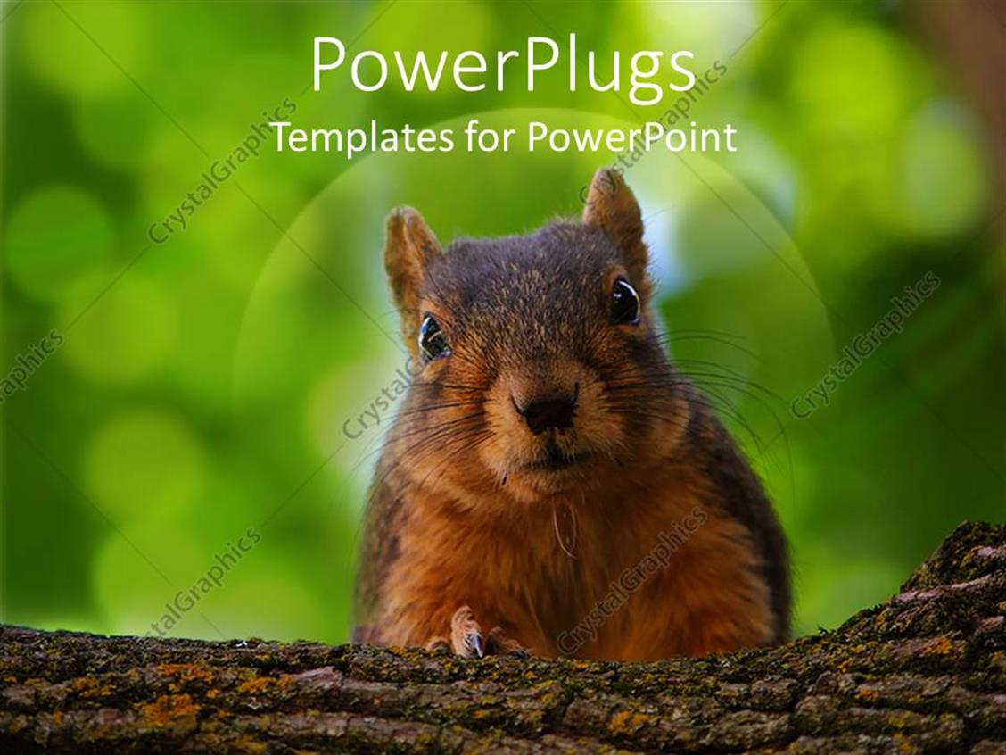 Excellent animal powerpoint templates contemporary example animals powerpoint template image collections templates example alramifo Choice Image