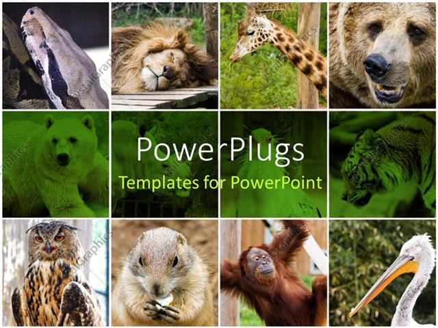 powerpoint template collage depiction of some wild animals, Powerpoint