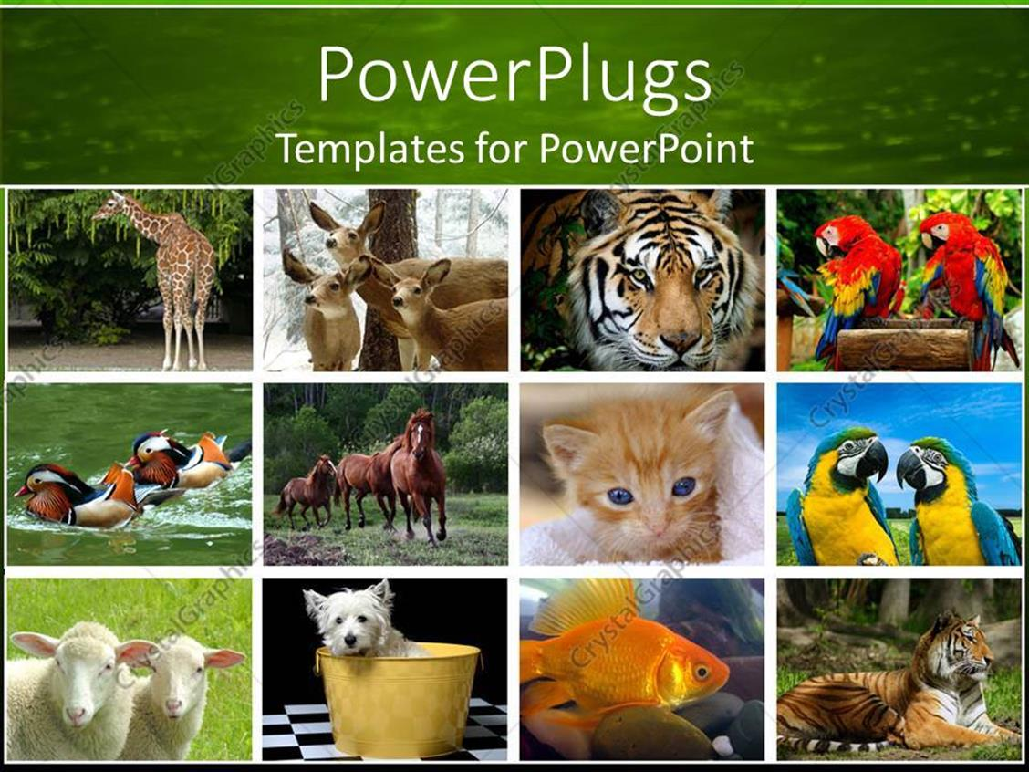 powerpoint template collage of twelve depictions of animals