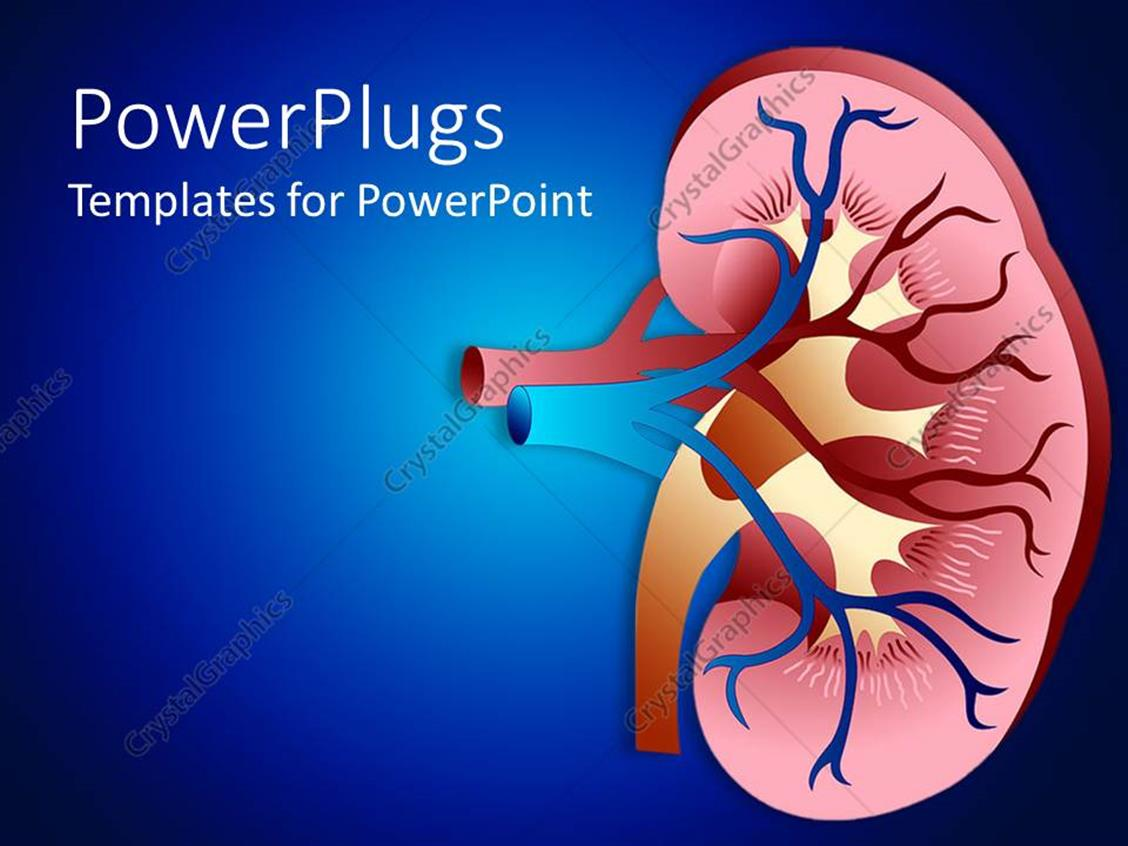 Powerpoint template design of sectioned kidney with veins on dark powerpoint template displaying design of sectioned kidney with veins on dark blue background toneelgroepblik Choice Image