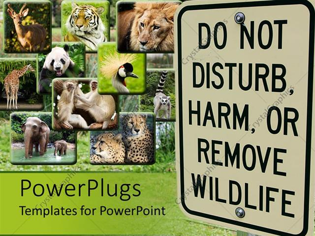 Powerpoint template different tiles showing different animals powerpoint template displaying different tiles showing different animals with a big do not disturb harm or toneelgroepblik Choice Image
