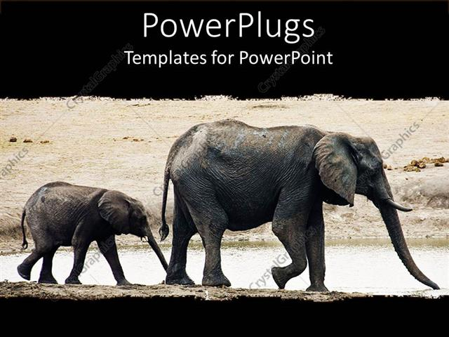 Elephant Images Pictures amp Photos  CrystalGraphics