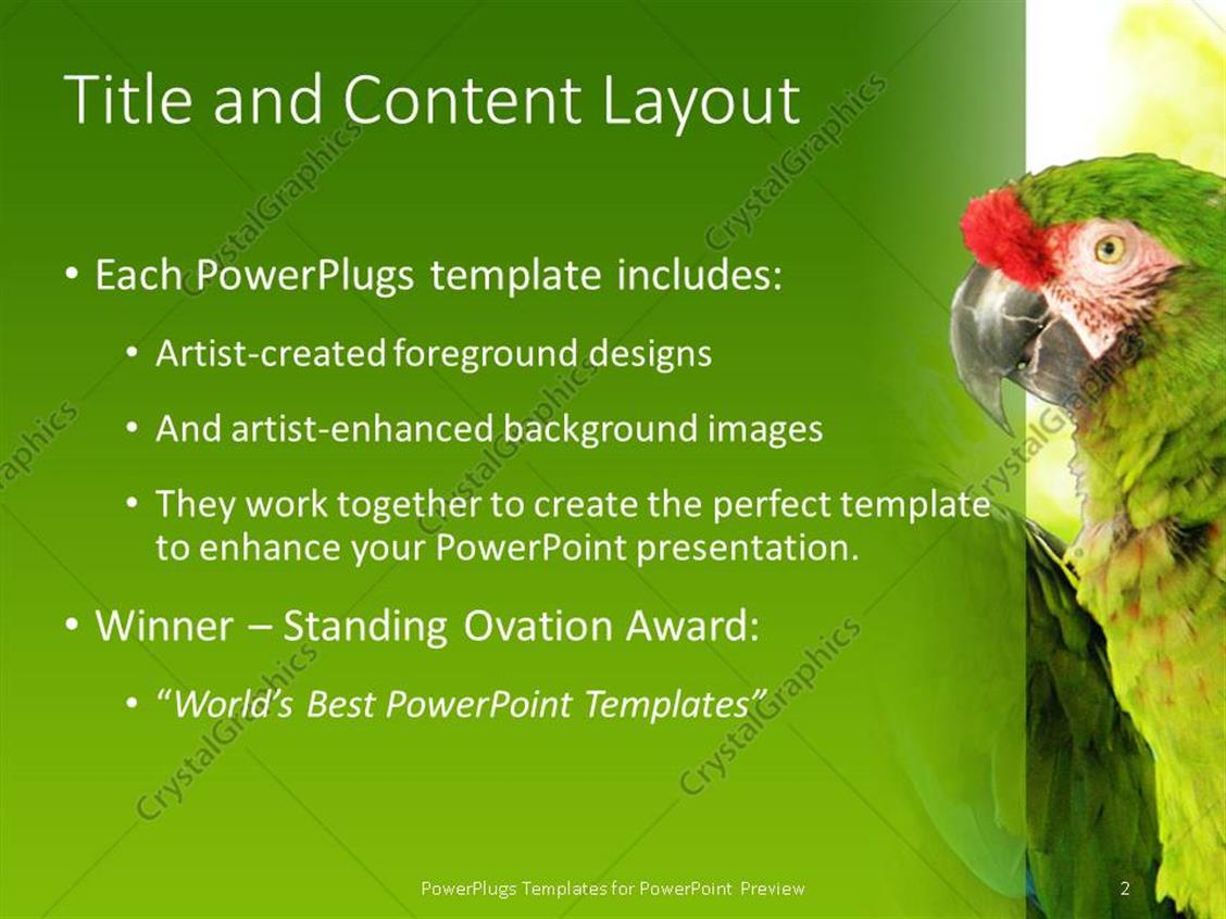 powerpoint template green tropical parrots perch on tree in