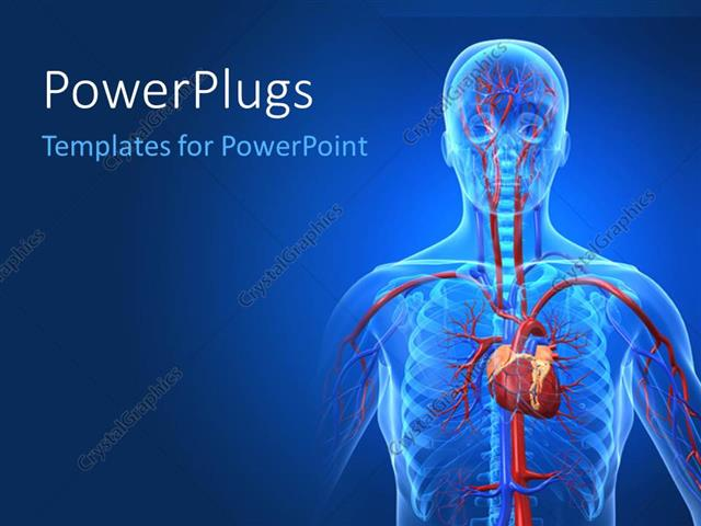 Powerpoint template a human anatomy with bluish for Anatomy ppt templates free download