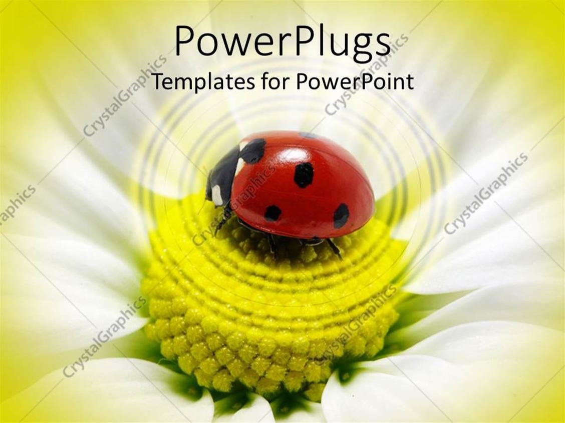 powerpoint template a ladybug on a flower with blurred