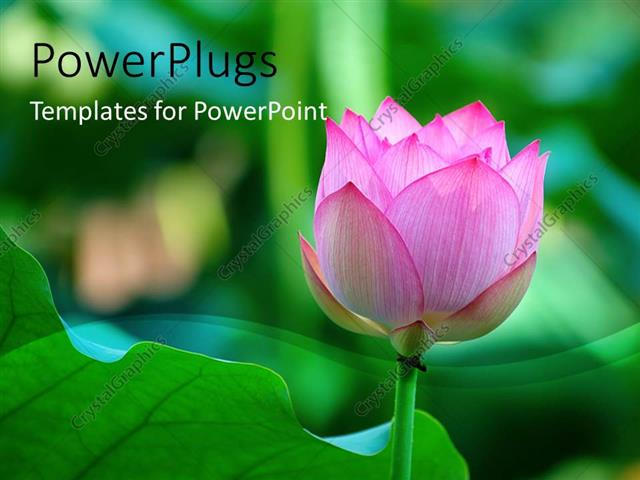 Powerpoint template lotus flower beside a green leaf with green powerpoint template displaying lotus flower beside a green leaf with green blur pronofoot35fo Choice Image