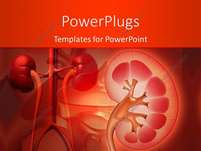 Powerpoint template medical theme with kidney and other human powerpoint template displaying medical theme with kidney and other human organs on red color toneelgroepblik Choice Image