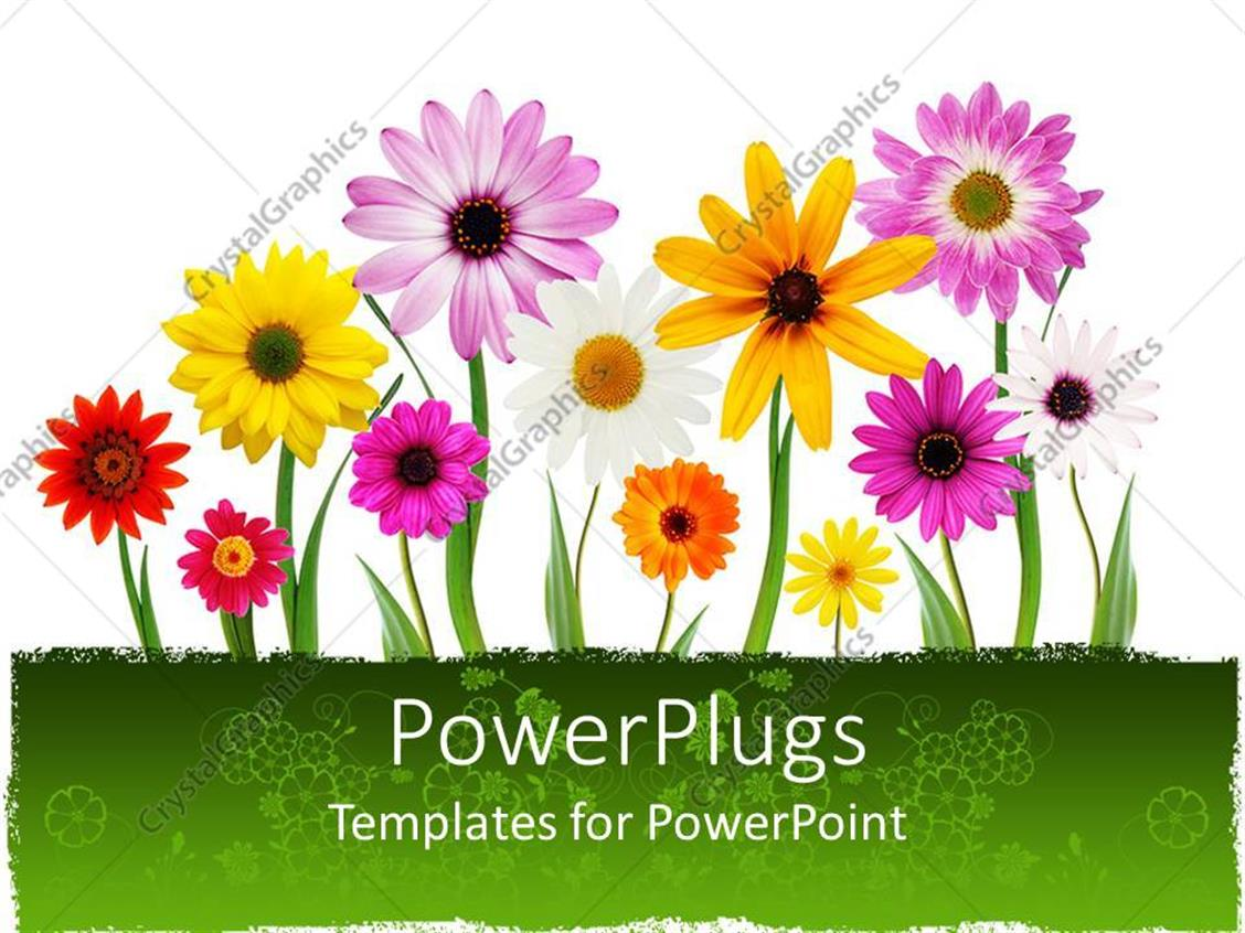 free powerpoint template floral certificate free printable, Modern powerpoint