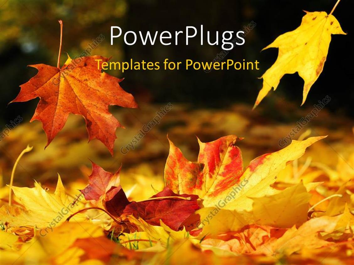 PowerPoint Template Displaying a Number of Leaves in the Fall Season