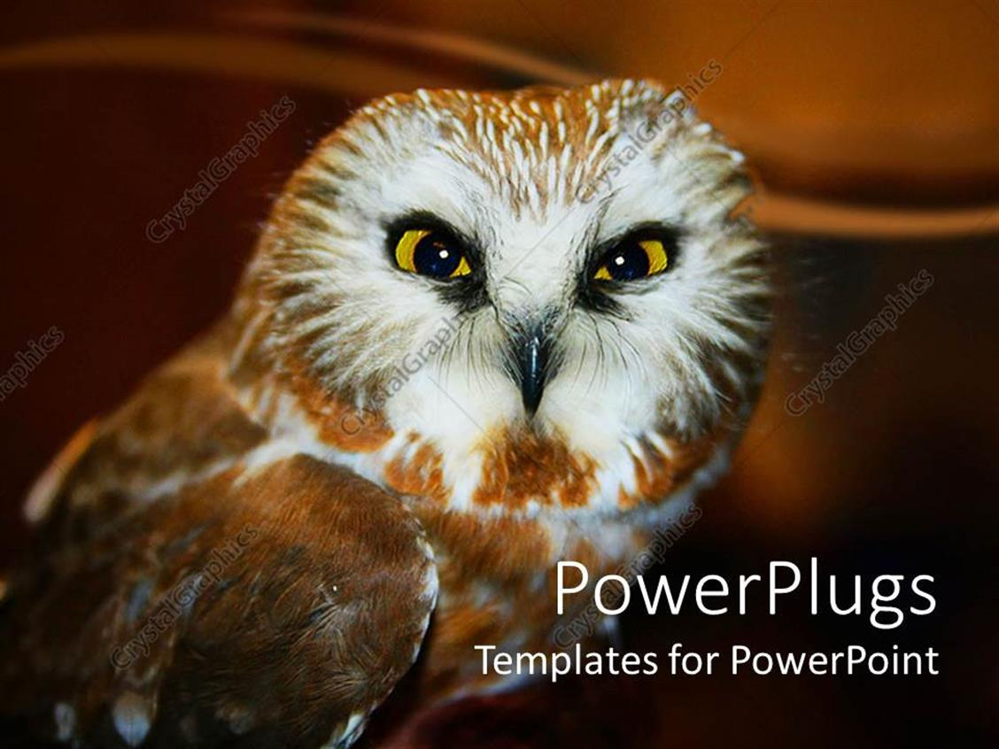 owl wallpapers for powerpoint - photo #27