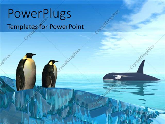 powerpoint template: a pair of penguins together with shark in the, Modern powerpoint