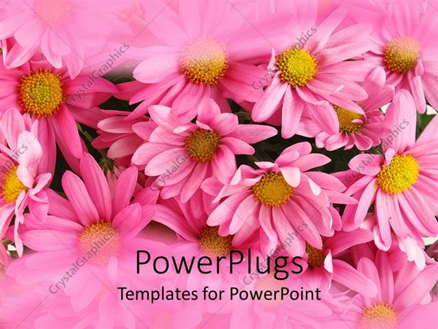 Powerpoint Template: Pink Background Of Low Growing Flowery Plant