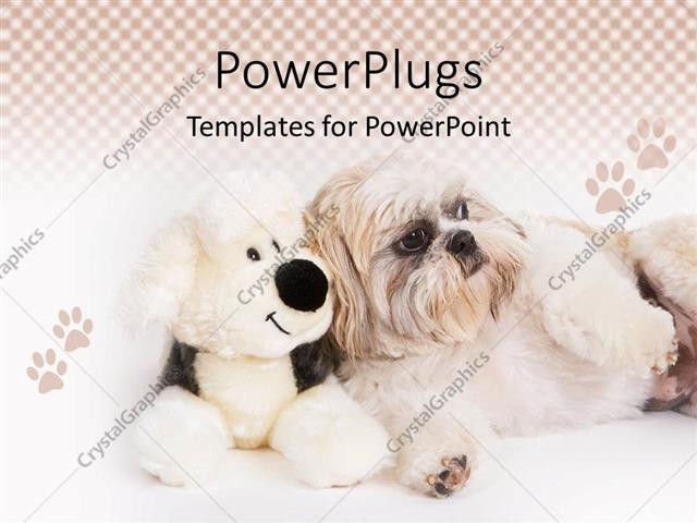 powerpoint template: shih-tzu dog sitting next to a stuffed dog, Modern powerpoint