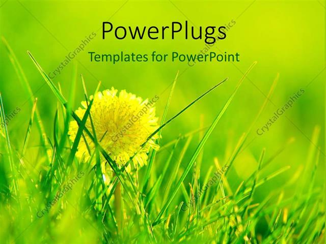 Powerpoint Template: Shining Dandelion Growing In Fresh
