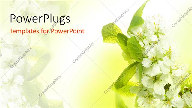 Powerpoint Template Spring Blossoms With White Flowers And Green