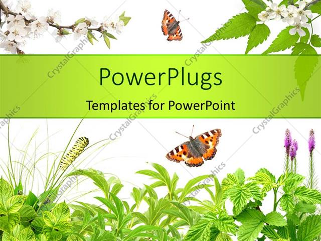 Powerpoint Template: Summer Frame With Green Leaves, Flowers And