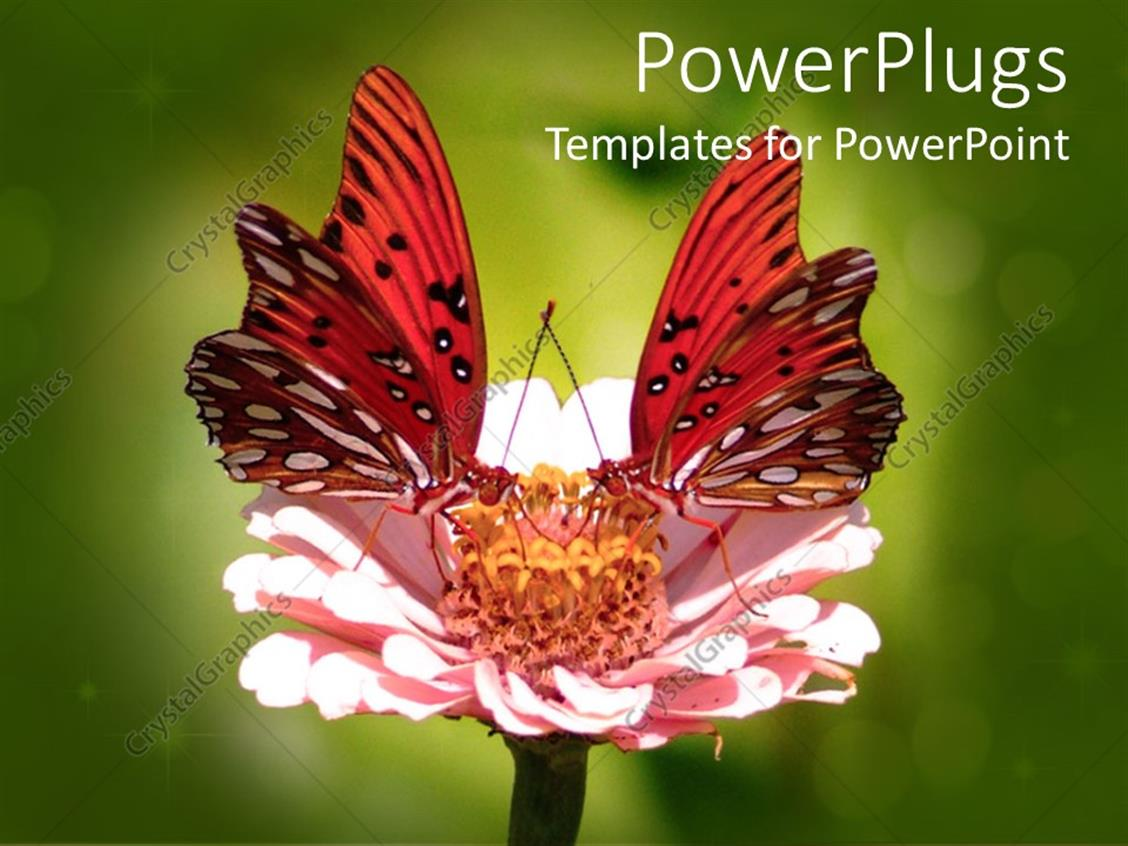 powerpoint template two butterflies on top of a flower 30252